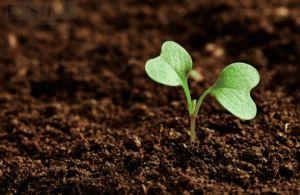 Máster agro, solución para el cambio climático
