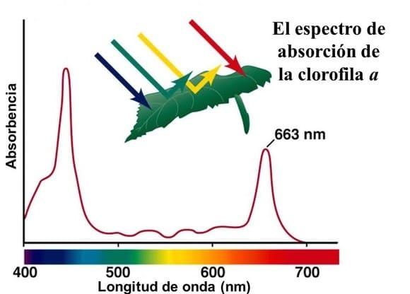 Espectro-de-absorcion-de-los-pigmentos